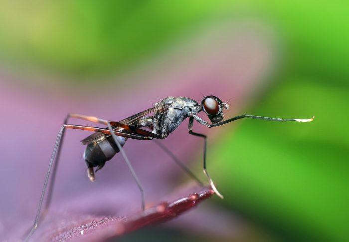 Superkolonie mieren komen steeds vaker voor